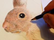 Uno scoiattolo trovato su Internet