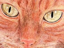 Ritratto di Zara con matite colorate